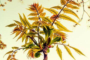 Planten van Jane Changart