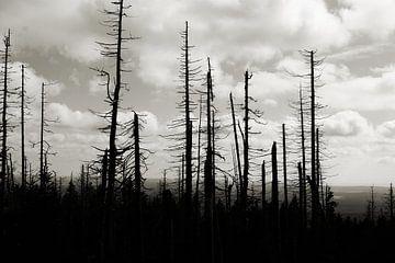 Tote Bäume in einem Wald am Fuße des Brocken bei Schierke von Heiko Kueverling