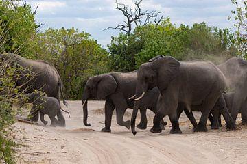 Overstekende olifanten van GoWildGoNaturepictures
