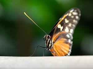 Prachtige vlinder van Mariëtte Plat
