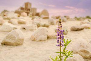 Eenzame Lupine straalt in de droogte van Anita Meis
