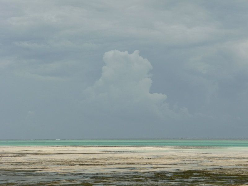 'Regenbui', Zanzibar van Martine Joanne