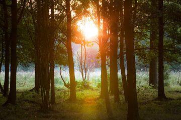Sonnenaufgang II von Marinella Geerts