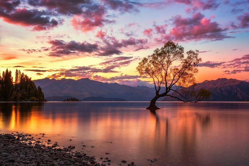 That Wanaka Tree Sunset van Cho Tang