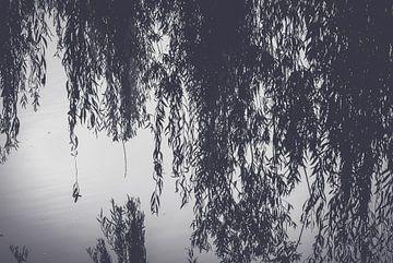 Wasserspiegelung Trauerweide im Park von Fotografiecor .nl
