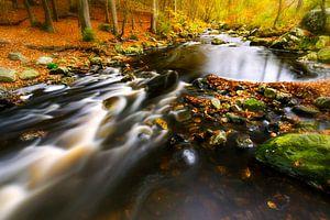 Stromend water in herfst bos van
