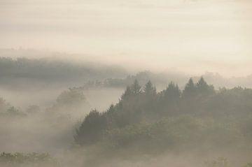 Mistig Bos van Lies Zijlstra