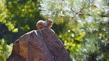 Eekhoorn - New Mexico  von Tonny Swinkels