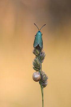 Vlinder von Daan de Vos