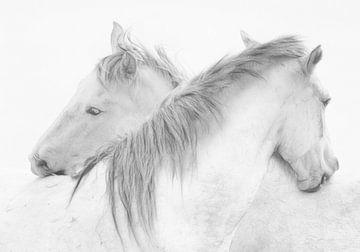 Paarden, Marie-Anne stas van 1x