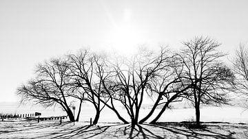 Bäume im Gegenlicht von Heiko Westphalen