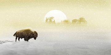 Bison im Schnee von Monika Jüngling