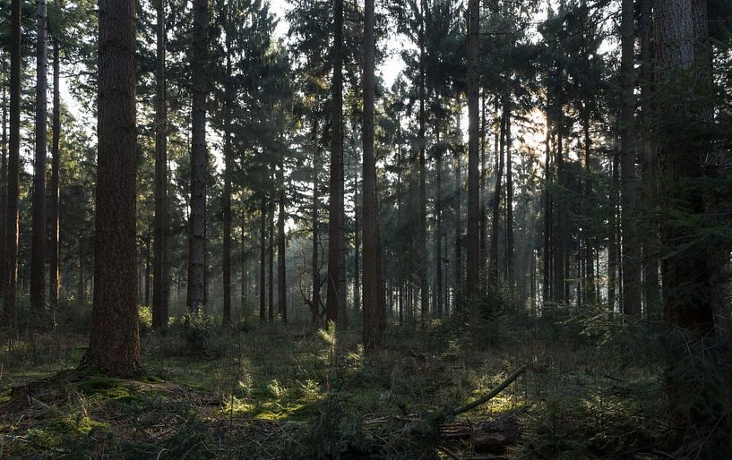 Zon schijn door de bomen in Lage Vuursche van Jaap Mulder