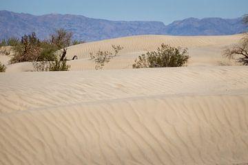 Mesquite Flat Zand duinen von Jeffrey Van Zandbeek