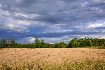Wolken boven graan