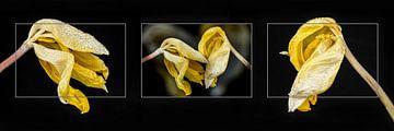 Beendete Blüte von Eddy Westdijk