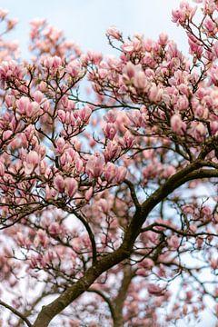 Magnolie Blumen | botanische Naturfotografie Druck von Manon Galama