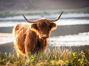 Portret van een Schotse hooglander #3 van Evelien Oerlemans