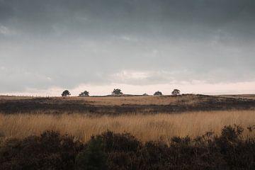 Die Bäume auf dem Hügel | Das Veluwe-Heidekraut von Nanda van der Eijk