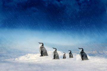 Die Pinguinfamilie auf dem Weg van