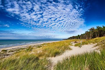 Mer Baltique - sur la Darß sur Reiner Würz / RWFotoArt