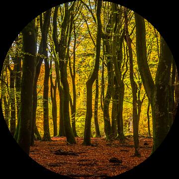 De magie van het Speulderbos van Eelke Brandsma