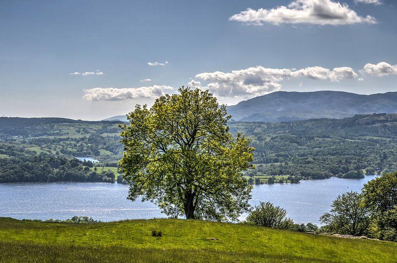 De boom en het meer van Frans Blok