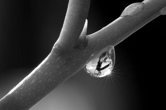 Een waterdruppel aan een tak