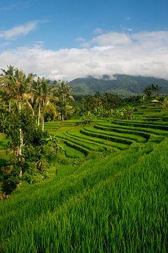 Reisfeld in Jatiluwih, Bali von Ellis Peeters