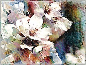 Kirschblüten 01 van Margitta Frischat