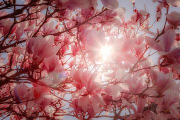 Frühlingssonne