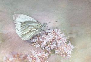 Vlinder vintage look van natascha verbij