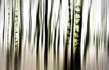 Birch forest  van Bianka Hesse
