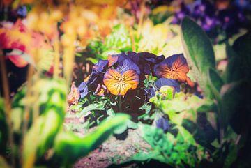 Blossom in Gruga - Frühlings Veilchen Gruppe Tulip in sanftem Bokeh fotografiert von Jakob Baranowski - Off World Jack