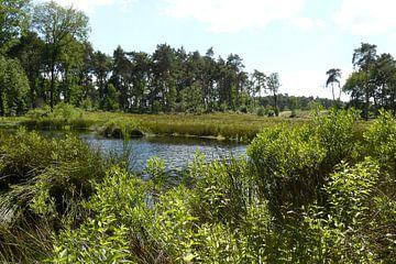 unieke natuur locatie van Rutger Bilk