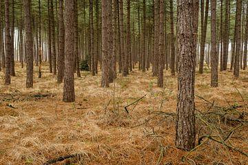 Die Bäume oder der Wald von Johan Vanbockryck