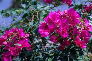 Pink von Colette Molin