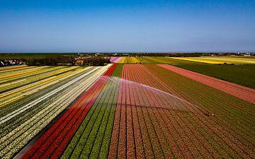 Een pracht aan kleuren! von K.C. Statia