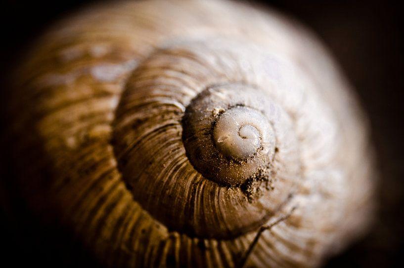 spiraal van Jo Beerens
