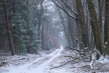 Hoog Buurlose bos von Frederik van der Veer