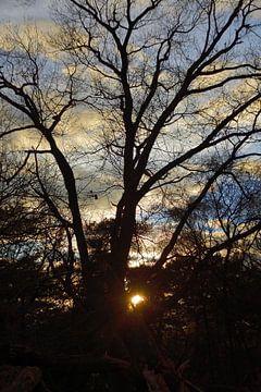 Baum bei Sonnenuntergang von Jurjen Jan Snikkenburg