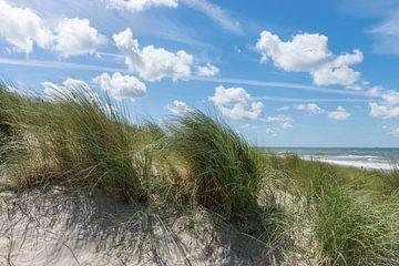 Pluk gras op een duin van Patrick Verhoef