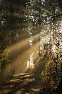 Zonnegroet! Zonnestralen schijnen door het bos van Amelisweerd!