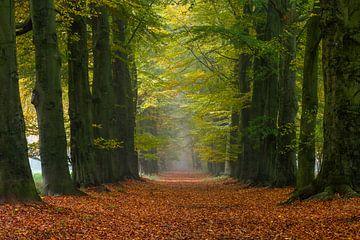 Autumn's Way