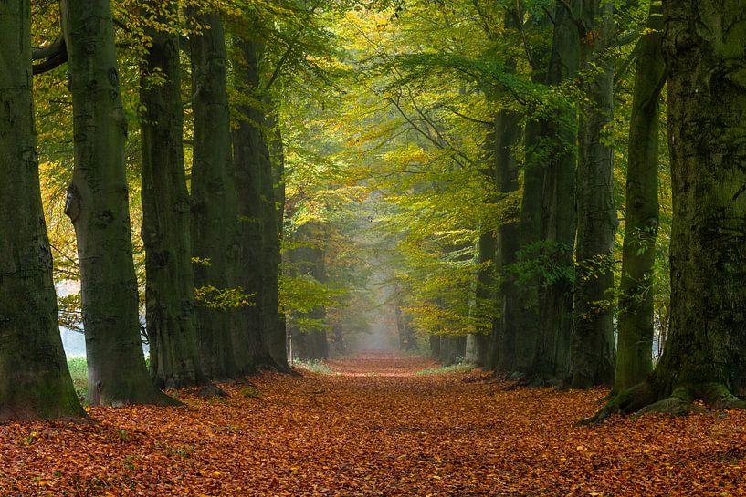 Autumn's Way van William Mevissen