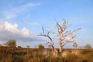 toter Baum von Wim Beunk