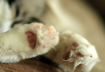 Ragdoll voetjes van Corry Husada-Ghesquiere