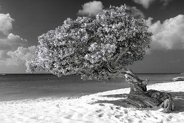 Divi divi Baum von Humphry Jacobs