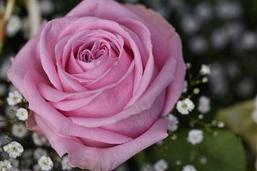 Rose rose sur Lizette de Jonge