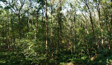 Eiken hakhoutbos in de nazomer van Wim vd Neut